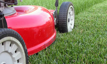 Lawn Care in Austin TX Lawn Care Services in Austin TX Quality Lawn Care in Austin TX