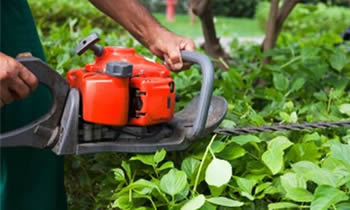 Shrub Removal in Austin TX Shrub Removal Services in Austin TX Shrub Care in Austin TX Landscaping in Austin TX
