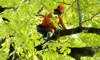 Tree Trimming in Austin TX Tree Trimming Services in Austin TX Tree Trimming Professionals in Austin TX Tree Services in Austin TX Tree Trimming Estimates in Austin TX Tree Trimming Quotes in Austin TX