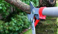 Tree Pruning Services in Austin TX